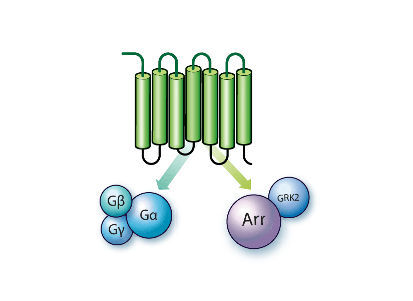 GPCR assay kits used in compound screening