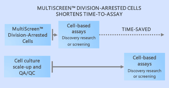 MultiScreen™ division-arrested cells shorten time-to-assay
