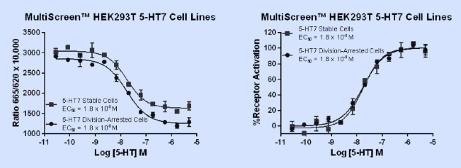 MultiScreen™ cAMP assay of 5-HT7 receptor division-arrested cell and stable cell line